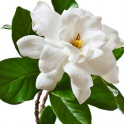 Дикий цветок