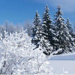 Почему зимой нельзя трогать металл?