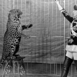 Цирковые животные - 20 ноября, 2016