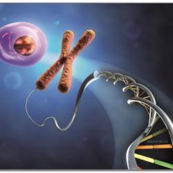 Вопрос-ответ.  Генетический потолок
