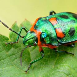 Накорми жука - спаси своё сердце!