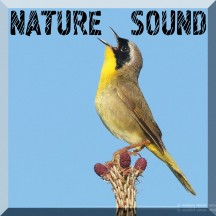 Nature Sound