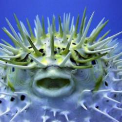 В процессе эволюции люди могут получить «вечный» запас зубов