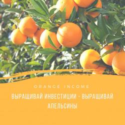 Выращивай инвестиции - выращивай апельсины. Orange Income