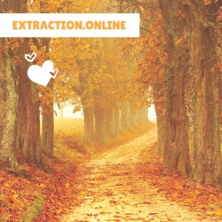 EXTRACTION.ONLINE. Инвестиционный проект