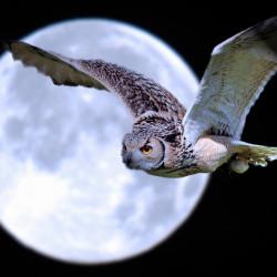 """Медитация """"Лунная птица"""" (на полнолуние)"""