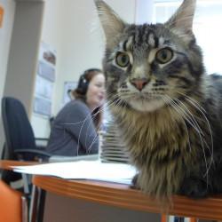 Кошки икоты внашей жизни— рассказывает кот Хэмингуэй (280)