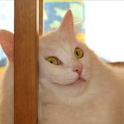Русский кот: ночное политическое шоу