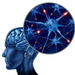подкаст для продвинутых о нейронах