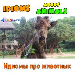 Устойчивые выражения (идиомы) про животных на английском. Гуанчжоу Сафари Парк