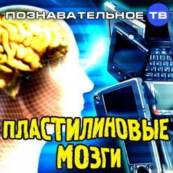 Пластилиновые мозги (Познавательное ТВ, Владимир Дзреев)
