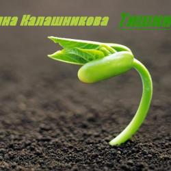 Екатерина Калашникова - Тишина (рассказ: научная фантастика, городская фэнтези, мистика)